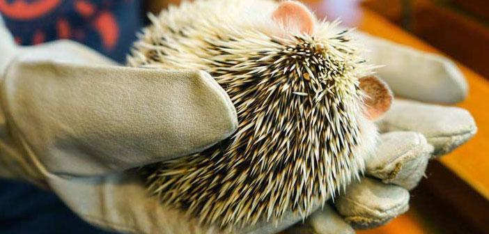 کافه Harry Hedgehog با میزبانی خارپشت ها